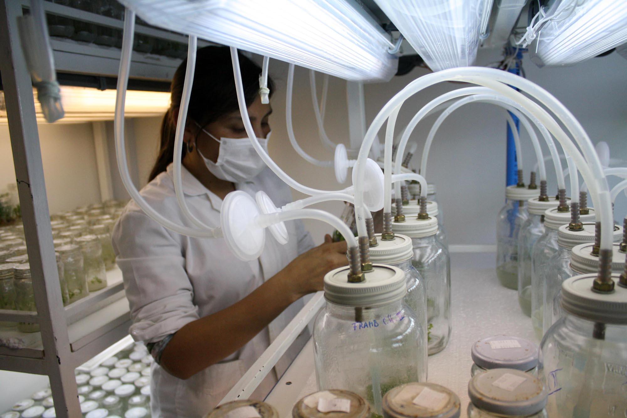 UCM implementa nueva plataforma para cobro de incentivo a la productividad científica