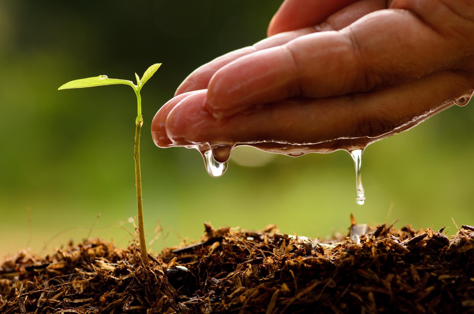 """Experto UCM  """"Falta el apoyo concreto de la autoridad política (…) Sin bosques no hay agua y sin agua no hay bosques"""""""