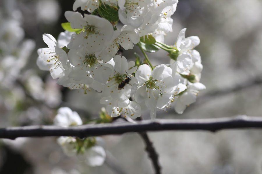 Ciencias: Revelan el alto aporte de las abejas nativas en la polinización de cultivos agrícolas